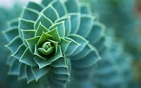 Amazing Pictures Of Nature by 35 Amazing Green Nature Wallpapers Dezineguide