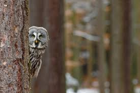 Barn Owl Sounds Who Said That 8 Owls You Might Hear At Night Mnn Mother