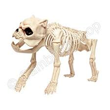 Halloween Decorations Life Size Skeleton by Life Size Skeleton Dog Halloween Prop Decoration Amazon Co Uk