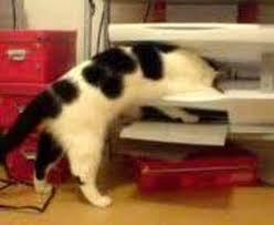 College Printer Meme - cats vs printers know your meme