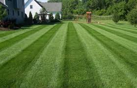 Landscaping Clarksville Tn by Action Lawn U0026 Property Maintenance Clarksville Tn 37042 Yp Com