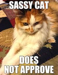 Sassy Cat Meme - my sassy cat it s raining cats and dogs pinterest cat and dog