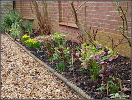 mark u0027s veg plot my garden right now