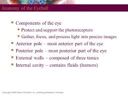 Anatomy Of Human Eye Ppt Powerpoint Lecture Slides Prepared By Leslie Hendon University