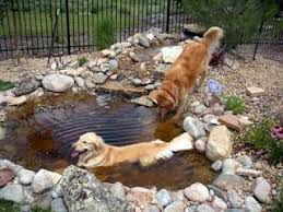 Diy Backyard Ponds Best 25 Dog Pond Ideas On Pinterest Dog Pools Plastic Dog