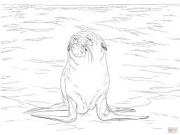 brown fur seal coloring page free printable coloring pages