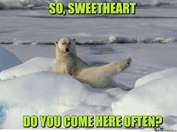 Polar Bear Meme - take a picture of me like one of your polar bears by clairvoyant