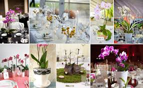 orchid centerpieces new product alert orchid plant centerpieces fiftyflowers the