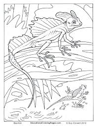 Lizard Color Pages Many Interesting Cliparts Reptile Coloring Pages