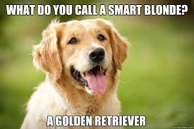 Golden Retriever Meme - what do you call a smart blonde a golden retriever golden