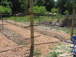 raspberry garden infrastructure done shelton u0027s market garden