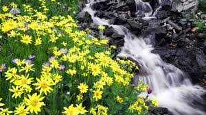 waterfalls wallpapers page 6 beautiful waterfall colorful color