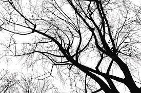 black trees photograph by maurizio cintioli