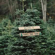 trinity tree farm home facebook