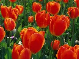 flowers atlanta about florist atlanta atlanta ga florist