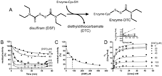 molecules free full text inhibition of urease by disulfiram