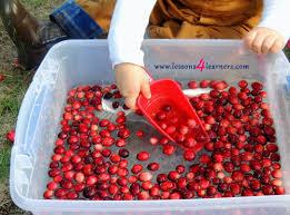 thanksgiving sensory bin cranberry sensory bin www lessons4learners com