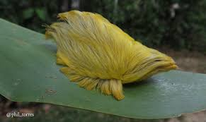 never touch anything that looks like donald trump u0027s hair wired