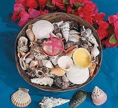 assorted seashells 12 basket of assorted seashells bulk toys and