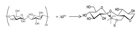alum bond coordination bond formation during mordanting of cotton with alum