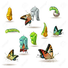 571 butterfly larva stock illustrations cliparts and royalty free