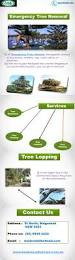 best 20 tree removal service ideas on pinterest u2014no signup