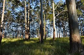 quality assurance program timber preservers association of australia