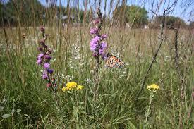 Ontario Field Biology Manitoba Prairie Escapades