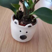 succulent planters for sale pottery polar bear planter small bowl cup catch all animal