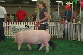 national swine registry july 2011