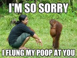 Monkey Jesus Meme - i m so sorry i flung my poop at you regretful monkey quickmeme