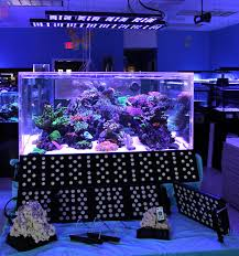 led reef lighting reviews sealife led aquarium lighting review reefs com
