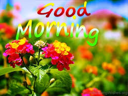 Nice Flowers 162 Lovely Good Morning Wishes With Flowers