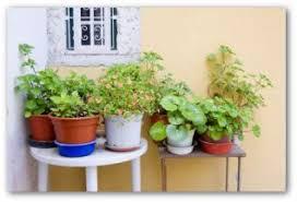 Indoor Vegetable Container Gardening - get started growing veggies in container gardens vegetable garden