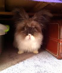 somebunny u0027s under the bed