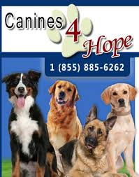 Comfort Dogs Certification Therapy Dogs Therapy Dog Training Service Dog Trainer Florida