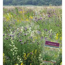 wild flowers in wild meadows sarah raven wild flower meadow mix seeds