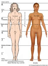 External Female Anatomy Diagram Human Anatomy Chart Page 45 Of 202 Pictures Of Human Anatomy Body