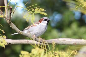 invasive non native plants journal club birdfeeding favours non native bird species the