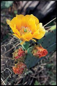 Flowers In Waco - wildflowers of texas texas highways