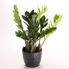 best indoor house plants best of what are some good indoor house plants