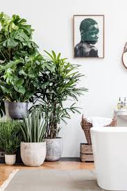 tall indoor plants liven up a corner nook of your house with an