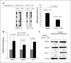 epigenetic dna methylation of antioxidative stress regulator nrf2