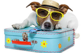 How To Travel With A Dog images Puppyfied 39 s ultimate dog travel checklist puppyfied jpg