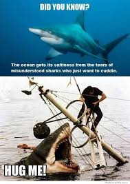 Funny Shark Meme - misunderstood sharks weknowmemes