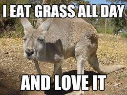 Meme Eat - i eat grass all day and love it tengaroo quickmeme