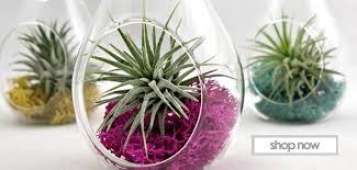Wholesale Glass Flower Vases Wholesale Glass Vases Cylinder Vases Candy Jar Glass Terrarium