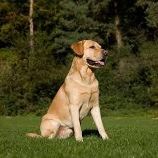 Tierarzt Bad Wildungen Qualifikationen U203a Hunde In Form