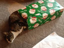 cat christmas wrapping paper 5 household activities my cats are obsessed with catster