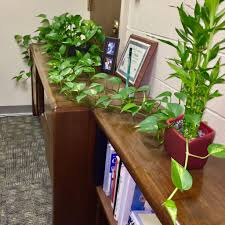 Indoor Plants That Don T Need Sun Desk Plants That Don U0027t Need Sunlight Ohio Tropics Houseplant And